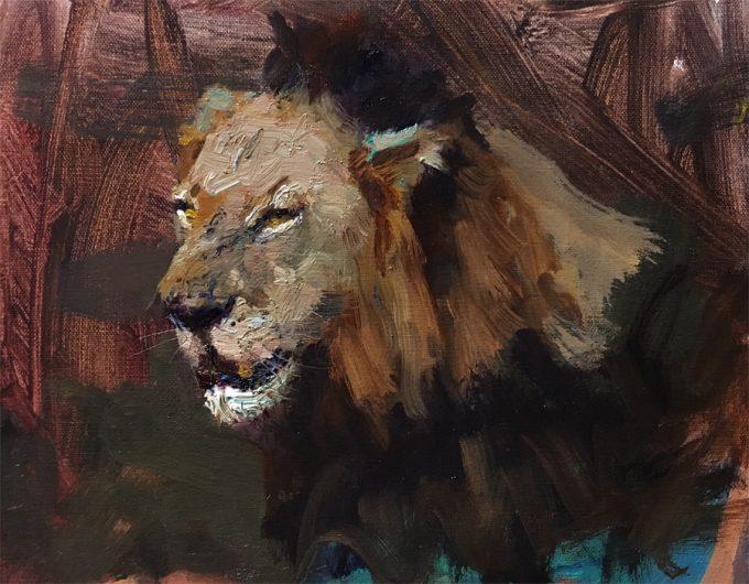 Mr. T - Mapogo Lion